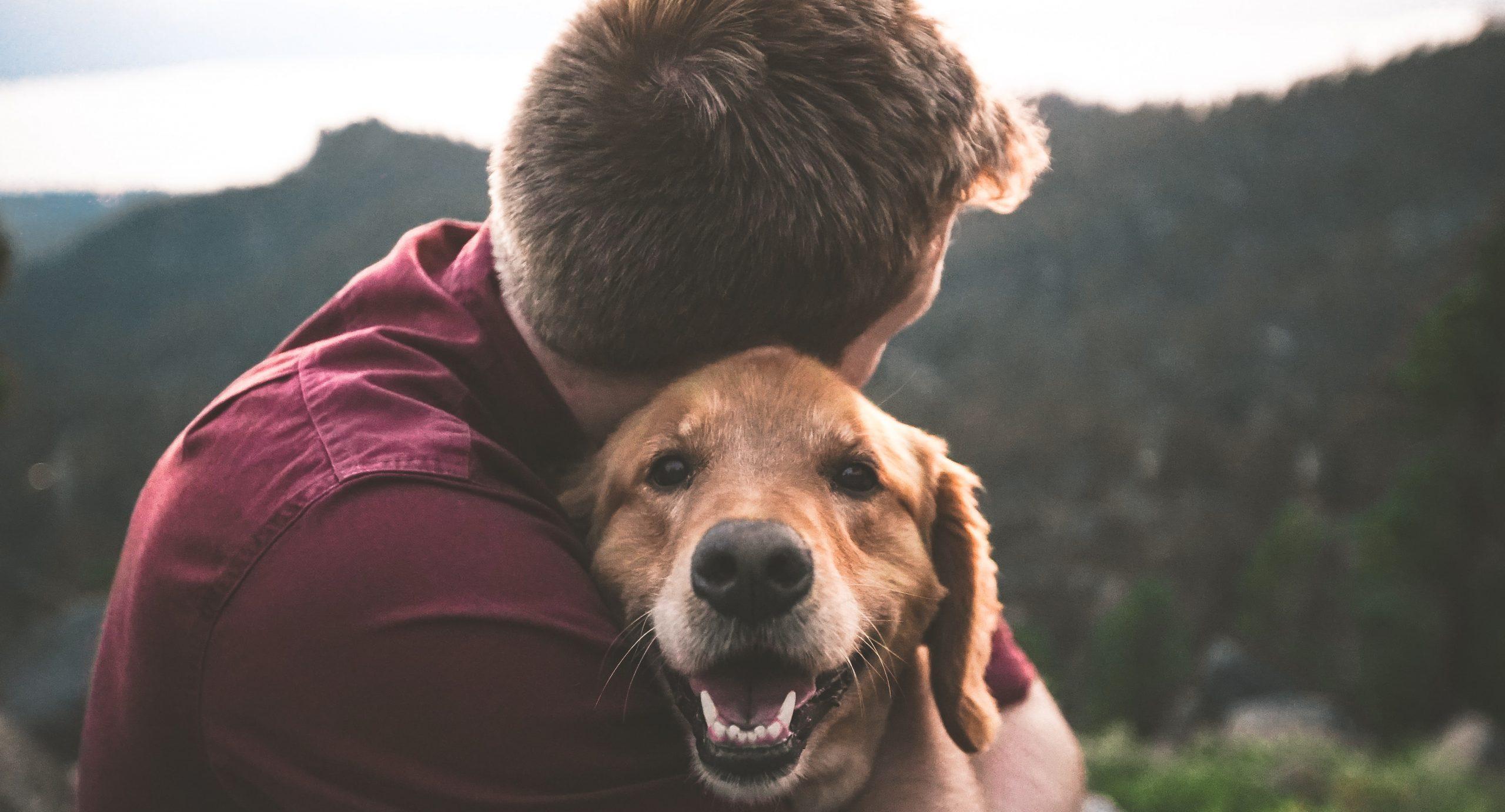 dieren en rouw